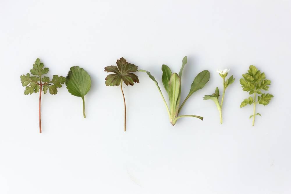 bylinky na ledvinové kameny